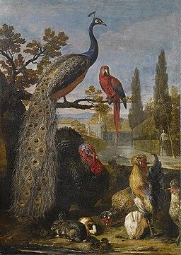 David de Coninck - Een pauw, een papegaai, kalkoenen, hanen, konijnen en een cavia in een park