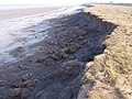 Dee estuary - crumbling embankment - geograph.org.uk - 709246.jpg