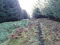 Deer track in the forest - geograph.org.uk - 1539975.jpg