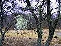 Dellifure Natural Burial Ground - geograph.org.uk - 1150310.jpg