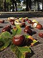 Der Bad Mergentheimer Kurpark im Herbst. 12.jpg