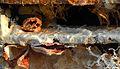 Detail of a Stone Crab Trap, Cedar Key, FL - Flickr - Andrea Westmoreland.jpg