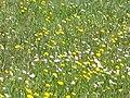 Detalle de flores en el Cerrod e los Ángeles.jpg