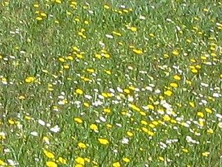 Detalle de flores en el Cerro de los Ángeles.jpg