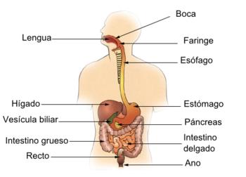 enfermedad del aparato digestivo wikipedia
