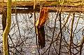 Diakonievene. Natuurgebied van It Fryske Gea 009.jpg