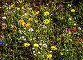 Die Farben der Natur (wer zählt die verschiedenen Arten? - Wer nennt die Namen und Gattungen?) (9228522413).jpg