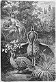 Die Gartenlaube (1880) b 801.jpg