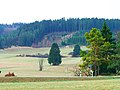 Different Shades Of Green - panoramio.jpg