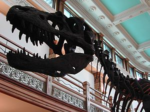 Redpath Museum - Image: Dinosaur In Redpath Museum Montreal March 2003