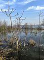 Dojran Lake 225.jpg