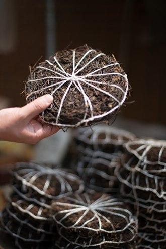 Pteridium aquilinum - Image: Dried Eastern brakenfern