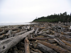 Driftwood Expanse, Northern Washington Coast.png
