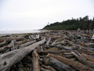 Stokes drift - Image: Driftwood Expanse, Northern Washington Coast
