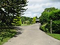 Driveway and gardens of Reynold's Farm - geograph.org.uk - 886086.jpg