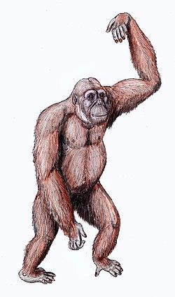 森林古猿族