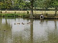 Ducks and duck house near Chates Farm - geograph.org.uk - 1502224.jpg