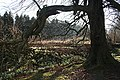 Duff House Woods - geograph.org.uk - 686035.jpg