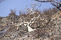Dunst Namibia Oct 2002 slide345 - bizarr und auffallend.jpg