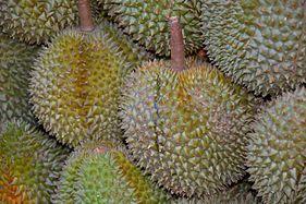 Durian fruit singapore.jpg