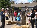 E9656-Katoomba-tourists-at-Three-Sisters-sculptures.jpg