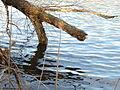 Eau Claire River Wisconsin A.jpg