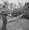 Een bulldozer verwijdert een boomstronk van een weg, Bestanddeelnr 14986.jpg