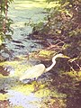 Egret in the Pool in Central Park 4.jpg