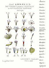 Flowering plant  Wikipedia