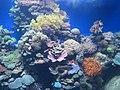 Eilat Coral World Underwater Observatory 25.jpg