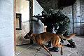 Eixo de defesa prevenção, repressão e combate ao terrorismo (14281508700).jpg