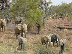 Elephants Pendjari