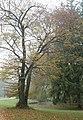 Englischer Garten Herbst-32.jpg