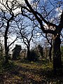 Epping Forest 20180125 150018 (49374556861).jpg