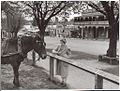 Ethel McDonald ( famer's wife) ties her horse in Main Street, Drouin, Victoria (6173545663).jpg