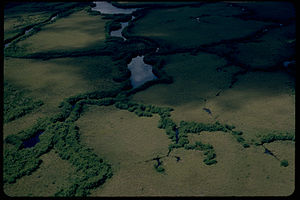 Everglades National Park EVER3281.jpg