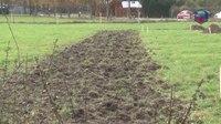 File:Extra bomen en struiken in Heumen- gemeente wordt groener.webm