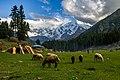 Fairy Meadows, Dimaer.jpg