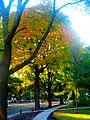 Fall Foliage in Maple Bluff - panoramio (2).jpg