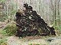 Fallen Tree - panoramio (1).jpg