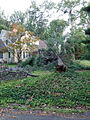 Fallen Tree in Yard (7516111518).jpg