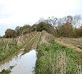 Farm track over disused railway bridge - geograph.org.uk - 1044117.jpg