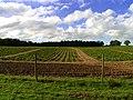 Farmland - geograph.org.uk - 11688.jpg