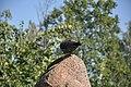 Feral pigeon in Nizhny Novgorod 05.jpg