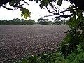 Field Near Grange Farm, Pelsall - geograph.org.uk - 265612.jpg