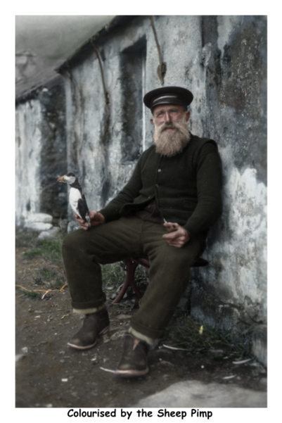 File:Finlay MacQueen (King of St.Kilda) with a stuffed puffin 1930 colour wiki.png
