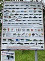 Fish size limit sign in Kingscliff, New South Wales.jpg