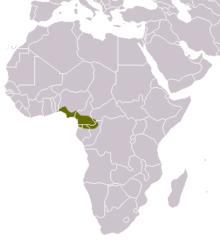Flat-headed Kusimanse area.png