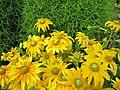 Fleurs jaune intense.JPG