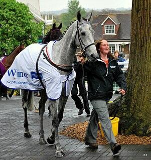 Simonsig British-bred Thoroughbred racehorse